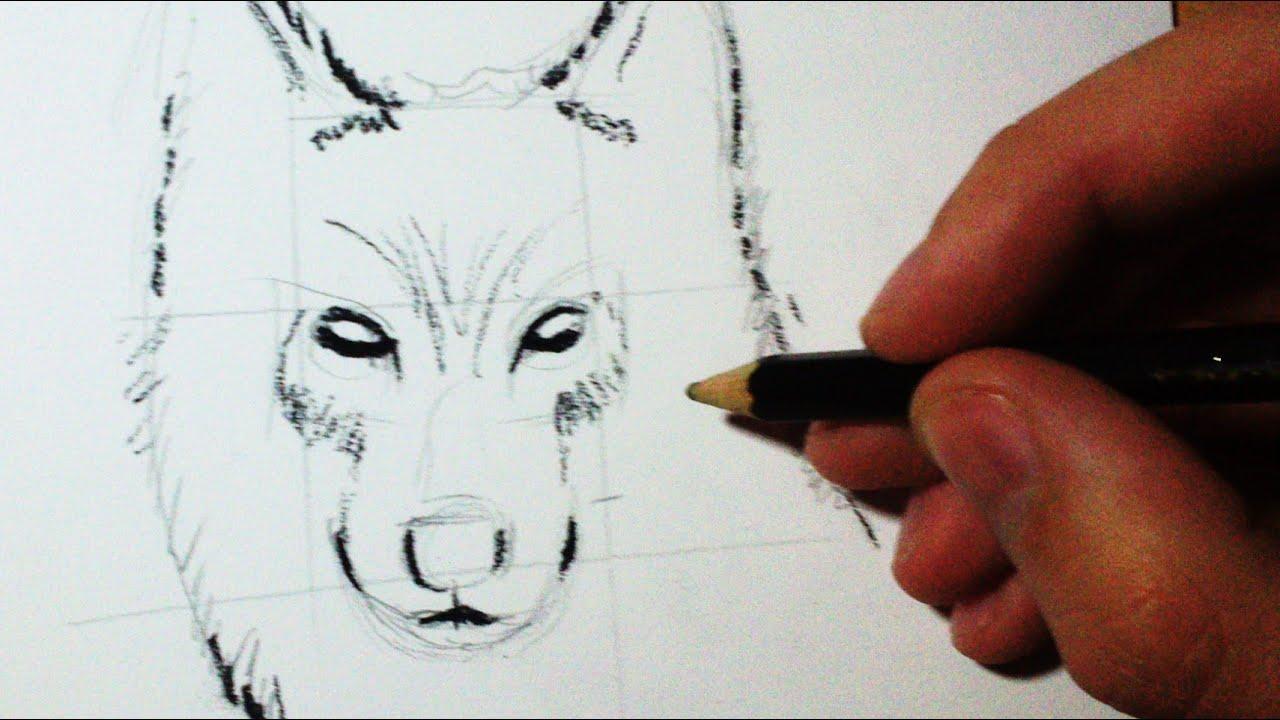 Comment Dessiner Un Loup Croquis Face Profil Tuto Youtube