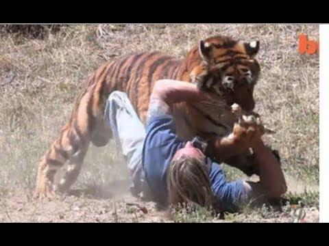 Тигры-людоеды в России и СССР: kiowa_mike — LiveJournal | 360x480