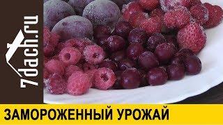 Что приготовить из замороженных овощей и ягод - 7 дач