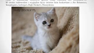 Hodowla kotów brytyjskich ZOJKA*PL