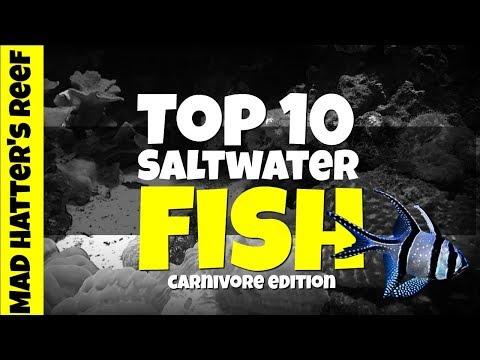 Top 10 Carnivore Saltwater Fish