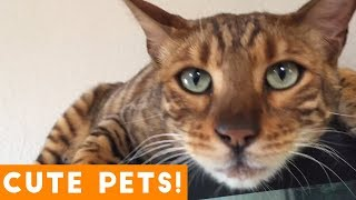 Cutest Pets of the Week Compilation May 2018   Funny Pet Videos