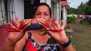 ENCOCADO DE CANGREJO AZUL