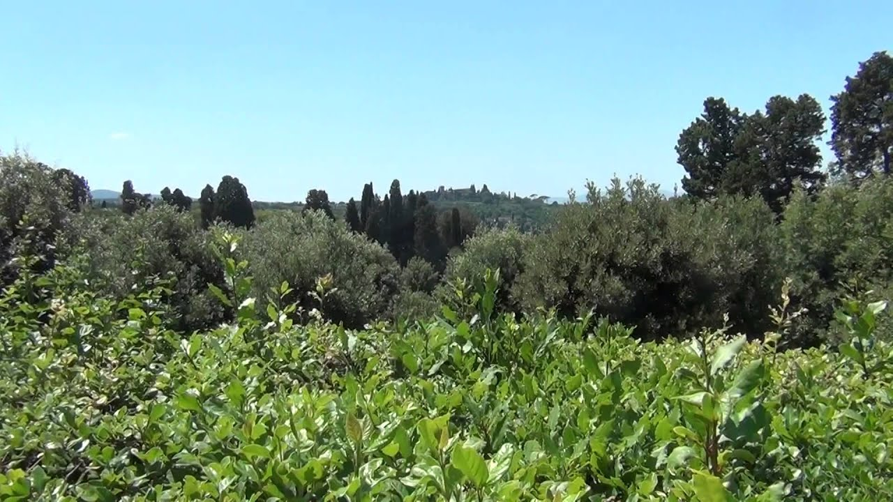 фото сады боболи флоренция