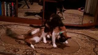 Мои кошки по моему лесбиянки)