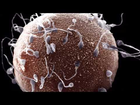 Плохое качество спермы дрезна