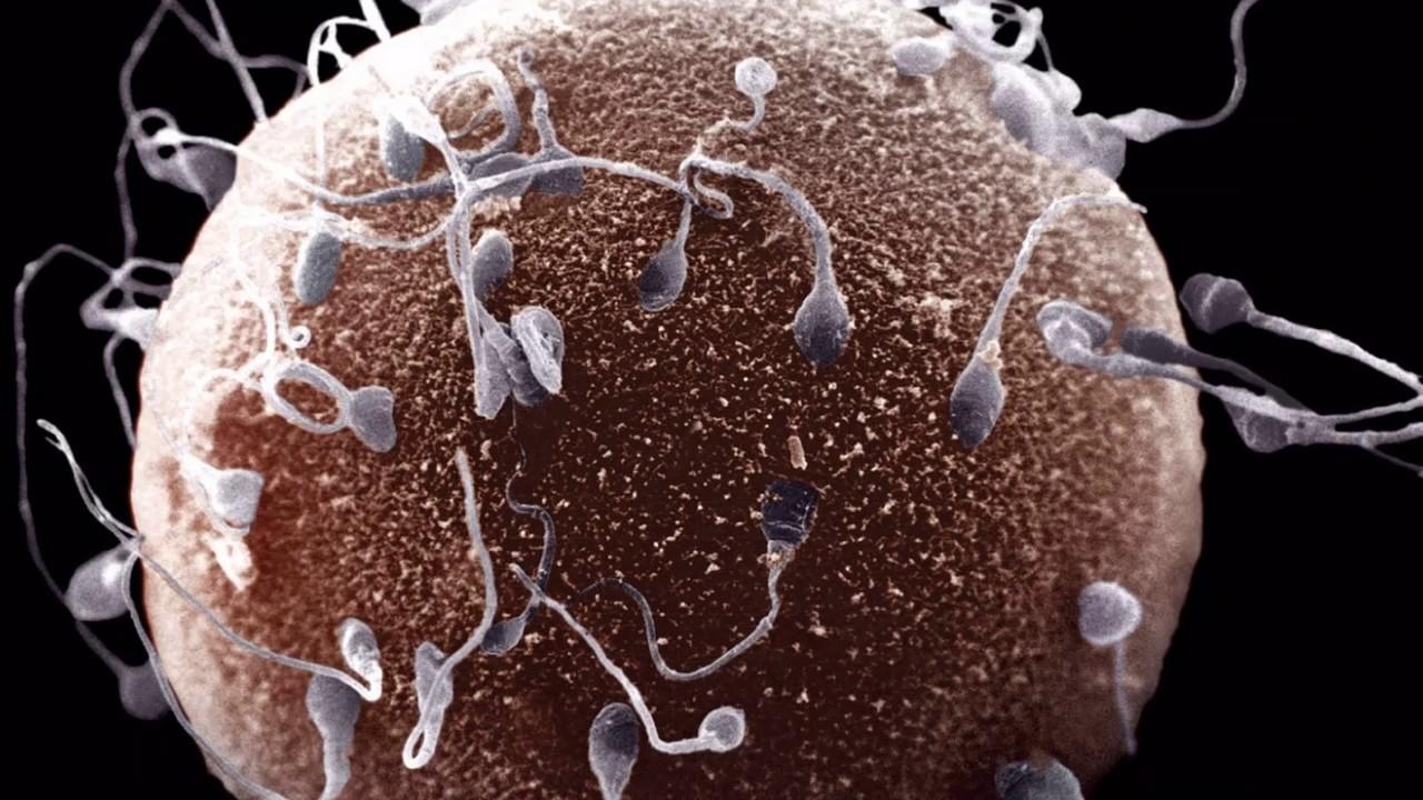 Поднять подвижность сперматозоидов