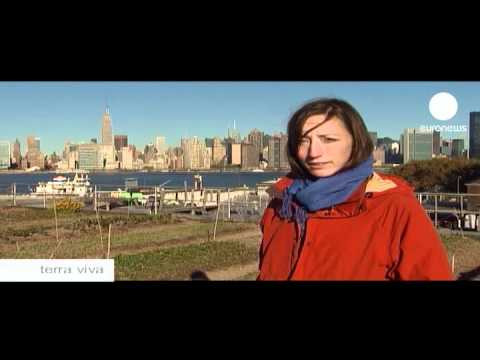 euronews terra viva - Top of the crops in NYC's rooftop farms
