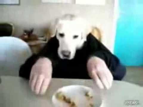 human crossbreeding with dog youtube