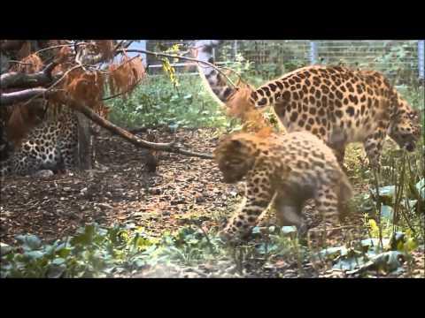 Tallinn Zoo - Mashpedia Free Video Encyclopedia