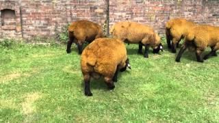 Specop Rams 2014
