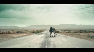 חמורים בארץ הקודש - דוד וולך -  donkeys in the Holyland - david volach