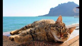 Весна в Крыму. Кот в Коктебеле