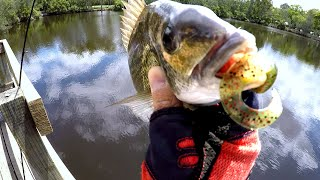 Deep In Snag Hook Up!  - Georges River Fishing