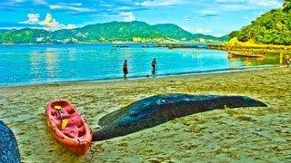 видео Пляж Най Янг, Пхукет: фото, как добраться, карта