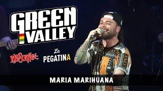 Green Valley / Rapsusklei / La Pegatina - Maria Marihuana