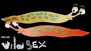 If You Think Your Sex Life Is Tough, Try Being A Slug