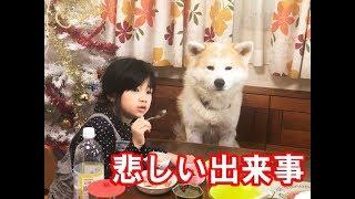 秋田犬ソウスケ君 物を結構大事にします 孫の響に貰った縫いぐるみを大...