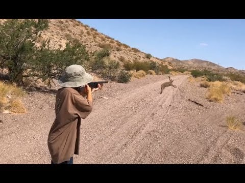 Kids Hunting For An Unprotected Species Of Rabbit ( Black-tailed Jackrabbit )