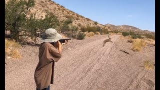 Kids Hunting For An Unprotected Species of Rabbit ( Black-tailed Jackrabbit ) thumbnail