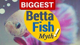 Debunking the Biggest BETTA FISH Myths