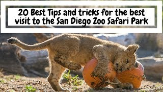 TIPS & TRICKS: The San Diego Zoo Safari Park