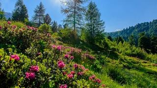 Rund um den Zirbitz / Wandern im Zirbenland / Steiermark