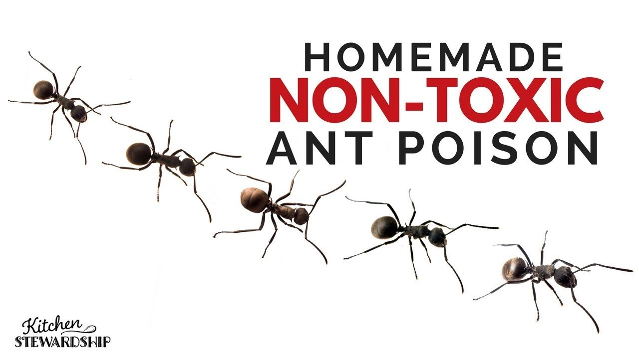 how to make homemade non toxic ant poison youtube. Black Bedroom Furniture Sets. Home Design Ideas