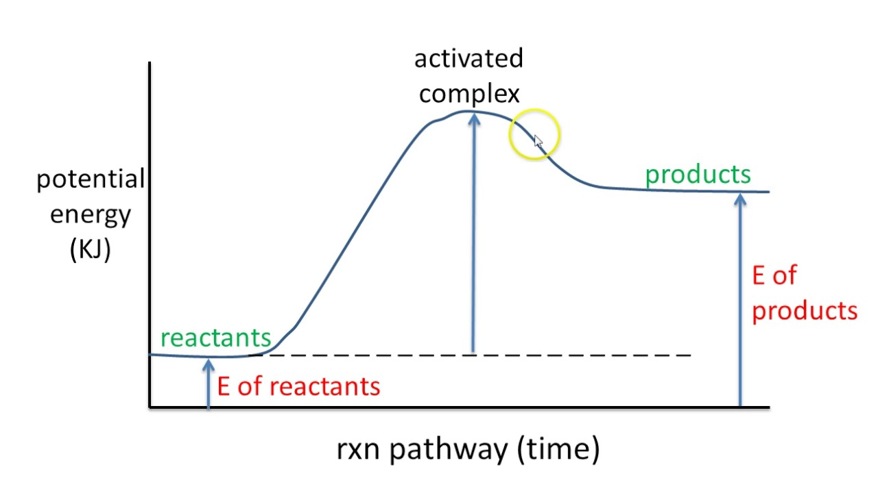 6 Potential Energy Diagram Endothermic Rxn