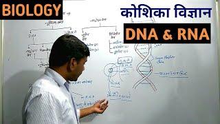 Biology: DNA & RNA