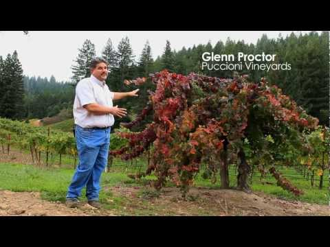 Behind the Wine: A look at Dry Creek Valley