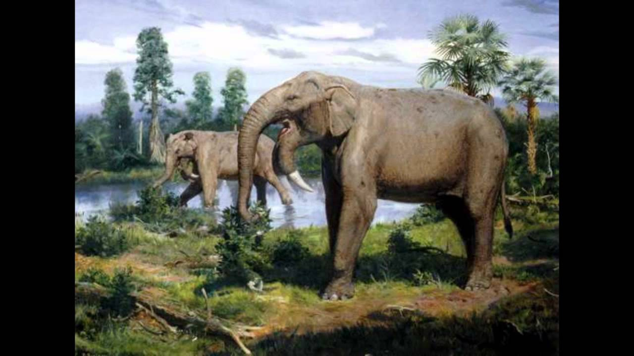 Are Elephants Mammals >> Top 10 Prehistoric Mammal Herbivores - YouTube