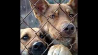 Бездомные животные.Подари мне жизнь!