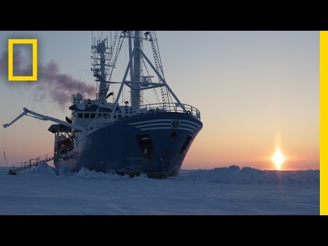 Drifting With the Ice: Life on an Arctic Expedition | National Geographic