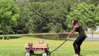 Smeraglia & Co. Youtube Trailer (goldendoodle Puppies)