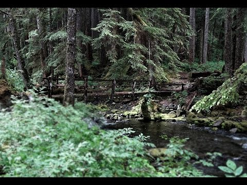 Bigfoot At Canyon Creek - Washington State Fisheries Employee Has Scary Bigfoot Encounter!