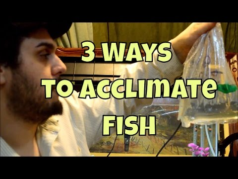 How To Acclimate New Fish In The Aquarium | 3 Different Methods Of Safely Acclimating Fish