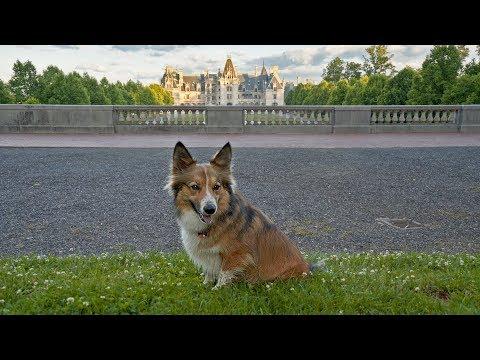 Sammy Visits Asheville - A Day in Dog-Friendly Asheville, North Carolina