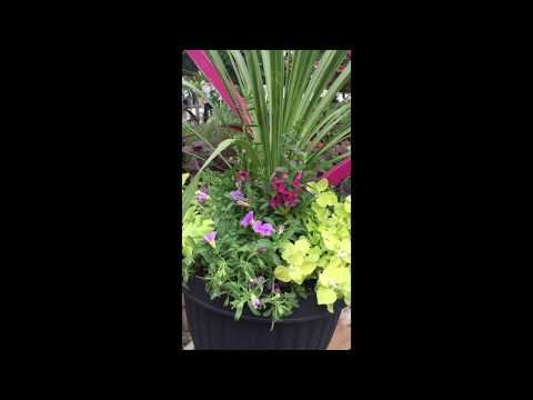 How to Create a Spring Patio Planter | Gemmell's Garden Centre