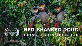 Douc Langur Foundation - Red-Shanked Douc