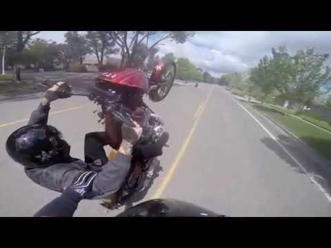 Harley Wheelies 13 - UNKNOWN Industries