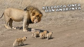 FIRE !, LION FAMILY AND IT'S STILL SMALL CHILDREN
