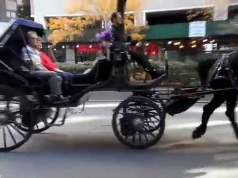 New Yorker Pferdekutsche