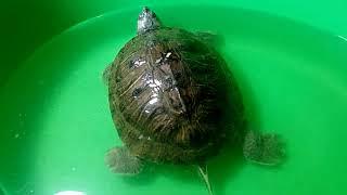 Что с черепахой? Как у неё дела? Назвала её Нэя)