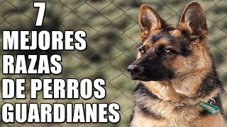 7 Mejores Razas de Perros Guardianes de Propiedad