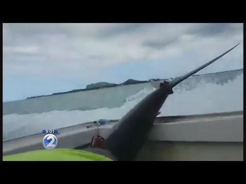 CAUGHT ON VIDEO: Fisherman Walks Away After Leg Impaled By Marlin