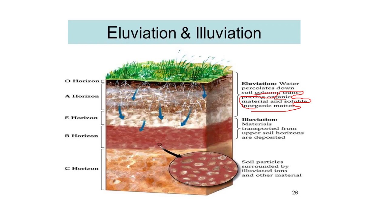Process of soil formation soil science 1 2 youtube for Soil formation