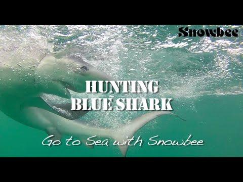 The Big Fish  How to Catch Shark - Sea fishing tips - Sea fishing rods - sea fishing reels
