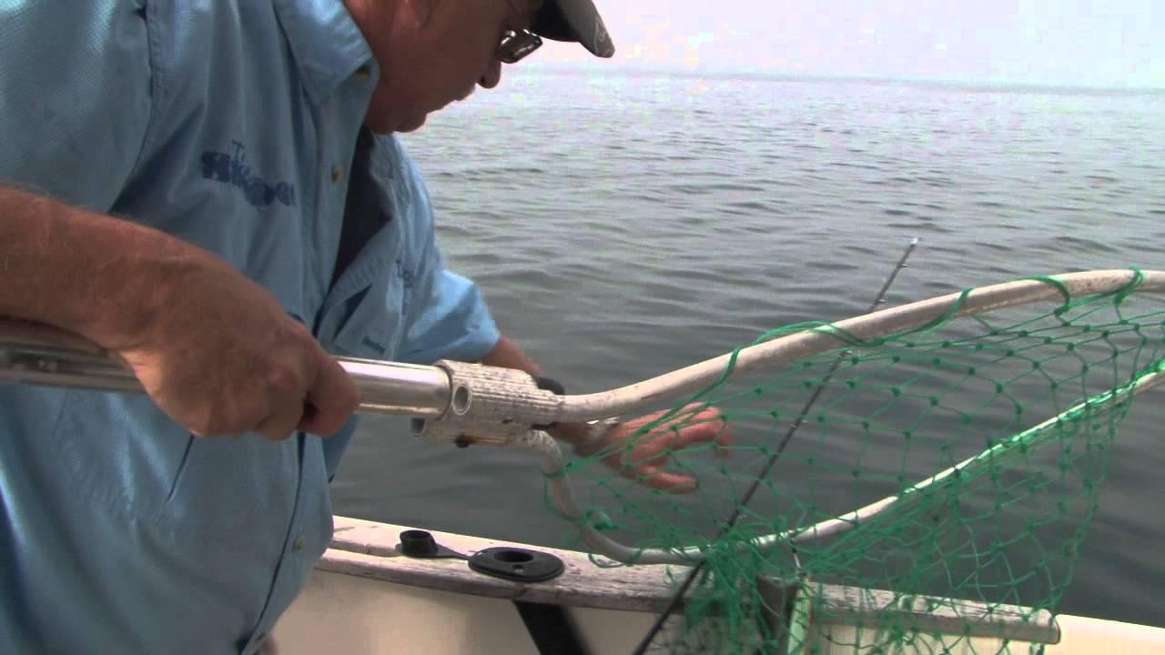 The big fish how to catch shark sea fishing tips sea for Shark fishing pole