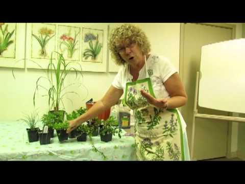 Growing & Using Fall Herbs